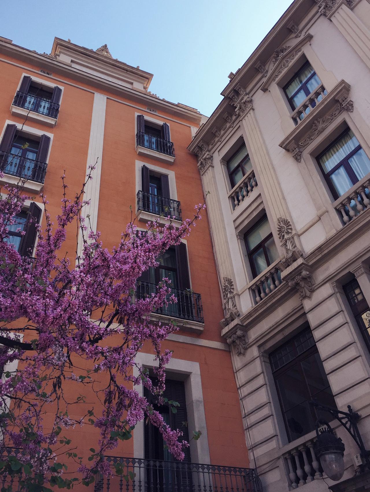 Barcelona Blossom